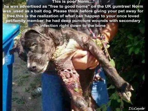 Never advertise a dog for sale. NEVER GIVE A DOG OR CAT