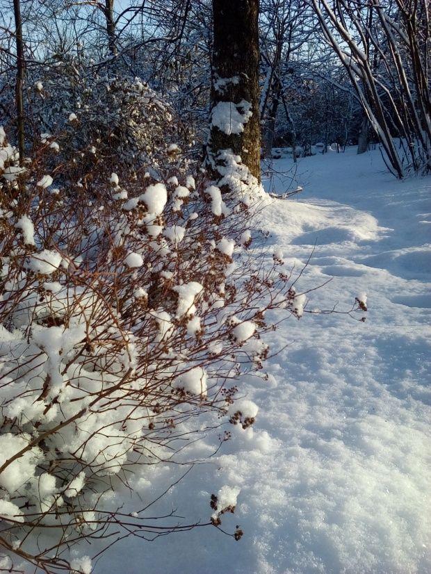 Zima w Polsce/Winter in Poland, Natura 15 270 (autor: jlez)