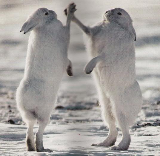 Rabbit Hi-Fives