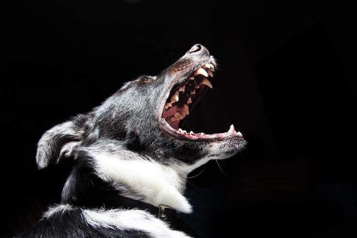 Will animals turn into zombies?