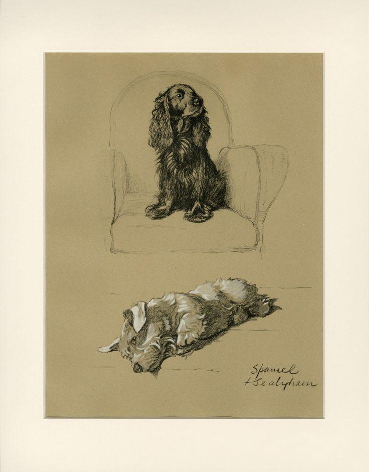 "Matted Vintage Dog Print  Cocker Spaniel & Sealyham Terrier  Cecil Aldin C.1934 11x14"" by AntiquePrintBoutique on Etsy https://www.etsy.com/listing/199448685/matted-vintage-dog-print-cocker-spaniel"