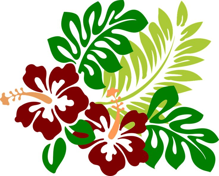 Hibisco, Flores, Rojo, Tropicales, Hawaiano, Primavera