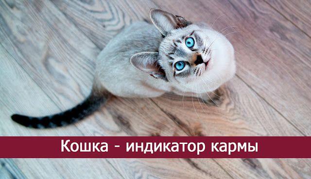 Кошка - индикатор кармы - Эзотерика и самопознание