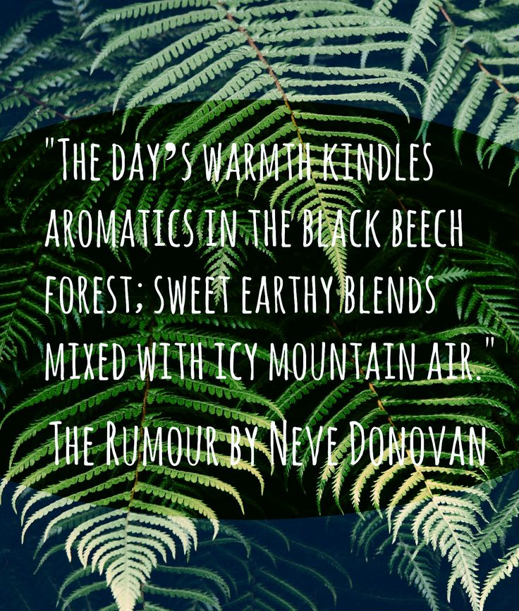 """""""The day's warmth kindles aromatics in the black beech forest; sweet earthy blends mixed with icy mountain air."""" The Rumour by Neve Donovan."""