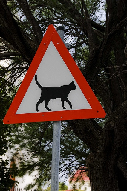 CAT CROSSING  (My favorite road sign ever... and it is in South Africa! Yay!! :~)))