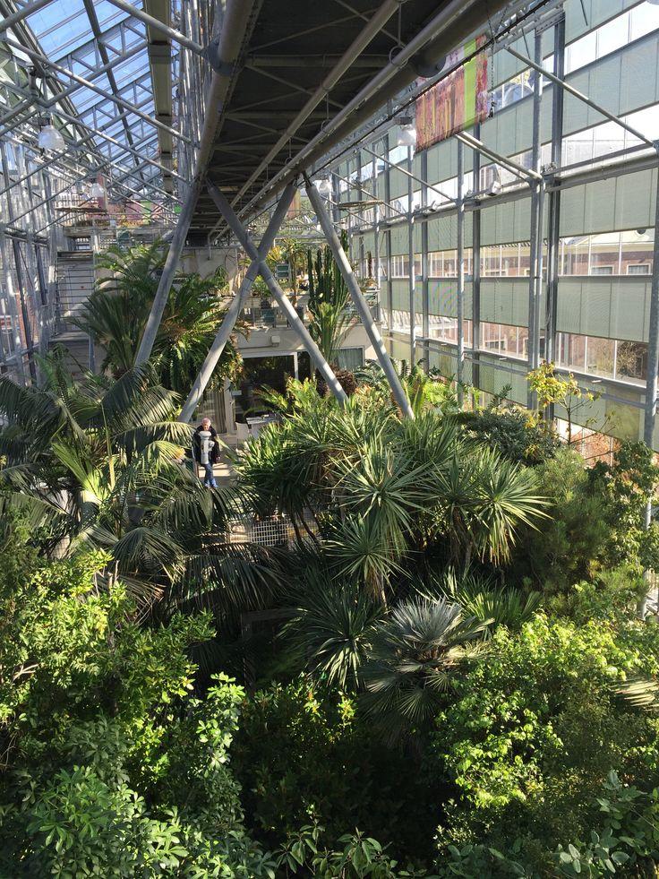 Hortus Botanicus, Leiden.