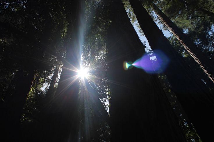 Muir Woods National Park. Photographer:Me