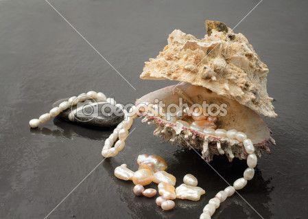 preziose perle all'interno di conchiglia di ostrica — Immagini Stock #17592383