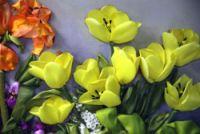 Gallery.ru / Фото #1 - Желтые тюльпаны - Marina-Chumakova