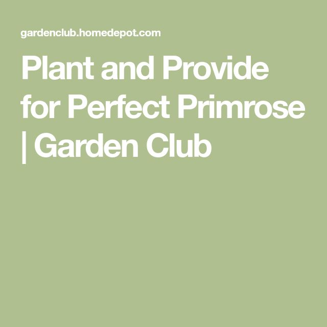 Plant and Provide for Perfect Primrose | Garden Club
