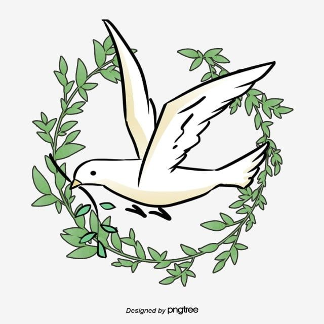 Peace Dove Pigeon Olive Branch Olive Png Transparent Clipart Image And Psd File For Free Download Peace Dove Nature Pictures Olive Branch