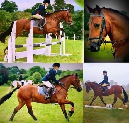 All round 148cm PC/RC Pony All Rounders for sale in Buckinghamshire, Thames Valley!