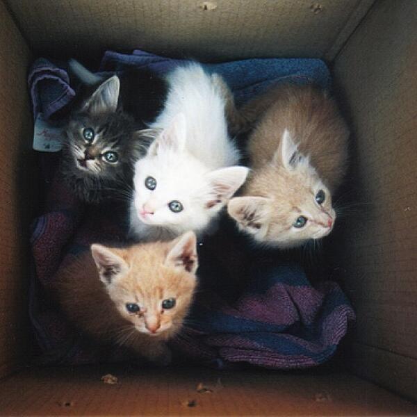 A box of cuteness.