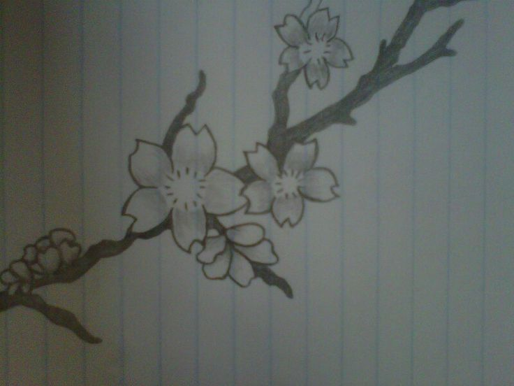 cherry blossom pencil drawing my art pinterest