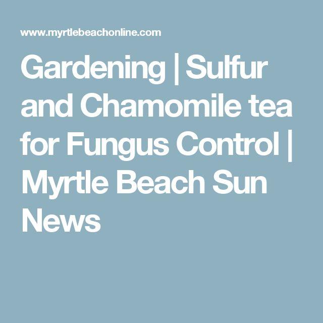 Gardening   Sulfur and Chamomile tea for Fungus Control   Myrtle Beach Sun News