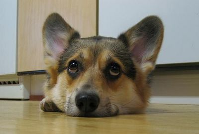 the look i get way too often from my corgis. :)