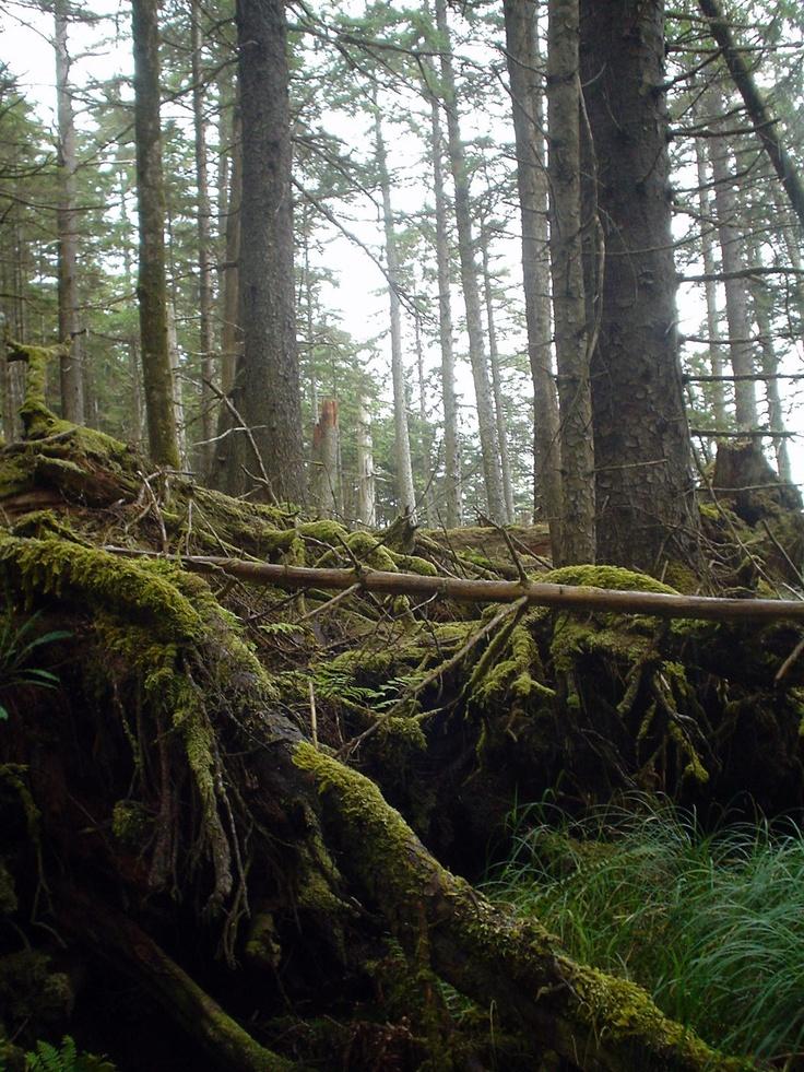 Naikoon Provincial Park, Haida Gwaii.