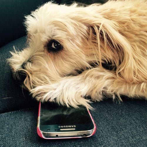 Hij bewaakt je telefoon wel hoor...