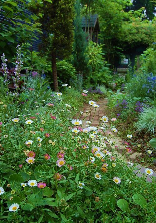 小道ガーデンのエリゲロン