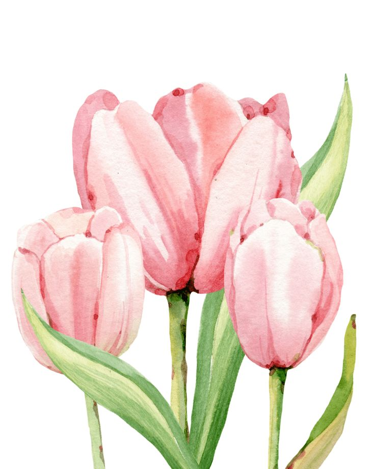 Watercolor Tulips free print, grab your cardstock paper and print this spring tulip. Frame in an 8x10 photo frame and enjoy!