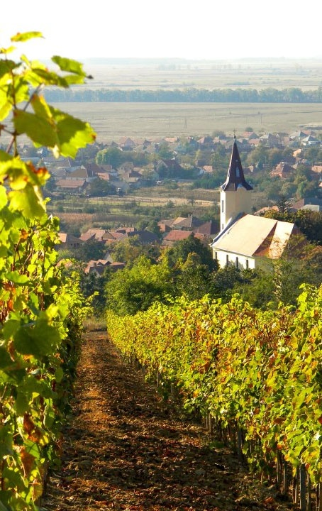 Final hours for a chance to win a #wine holiday to #Tokaj! #WineristCompetition