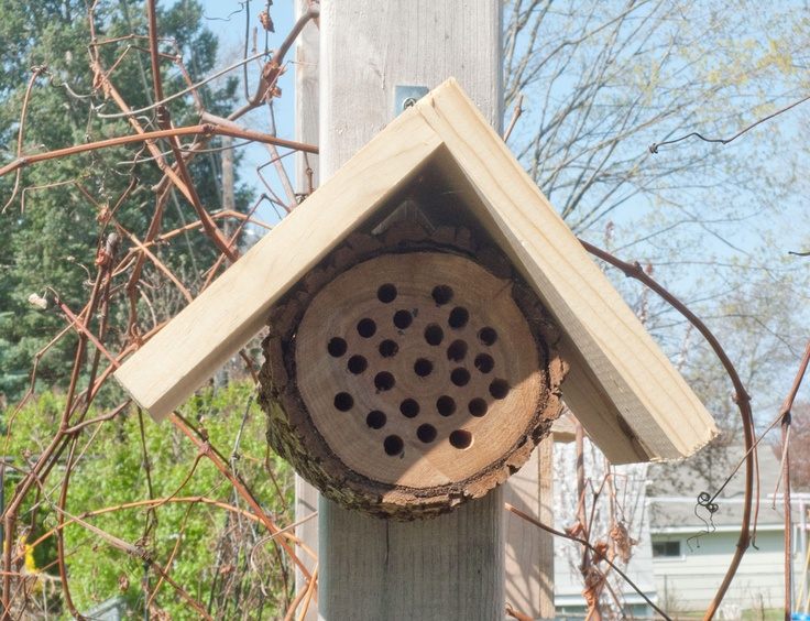 1000 Images About Solitary Bee Habitats On Pinterest