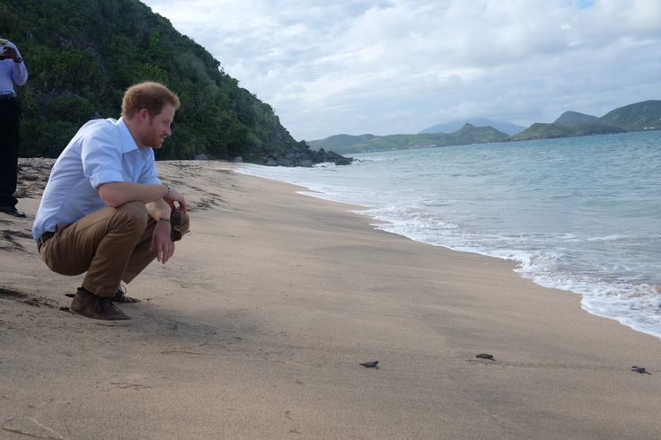 """Kensington Palace on Twitter: """"The Nevis Turtle Group conservation initiative is dedicated to developing a Sea Turtle Conservation Programme in Nevis #RoyalVisitStKitts"""