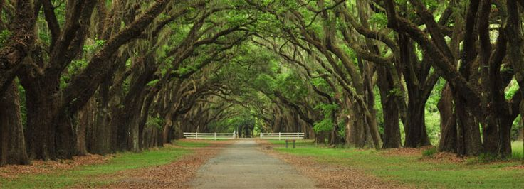 The Top 20 Savannah, USA Tours & Things to Do with Viator Tomorrow, This Weekend, or in February | Viator.com