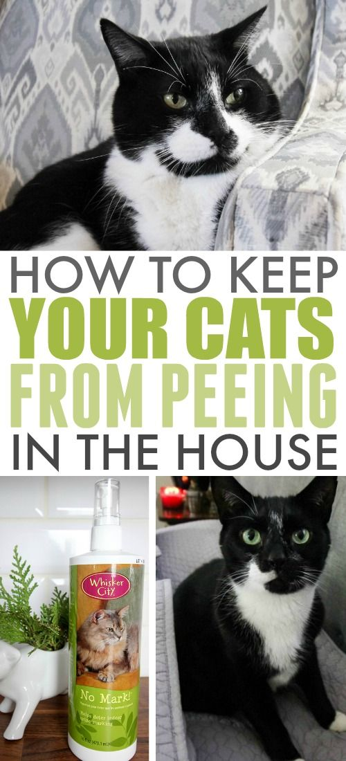 5435 best tricks and hacks cleaning images on pinterest for Having an indoor cat