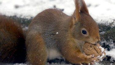 Tiere im Winter Tarnen, wärmen, schlafen Tiere