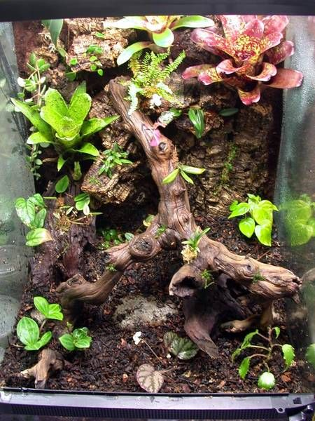 Vertical Planted Tank With Cracked Cork Bark Sphagnum