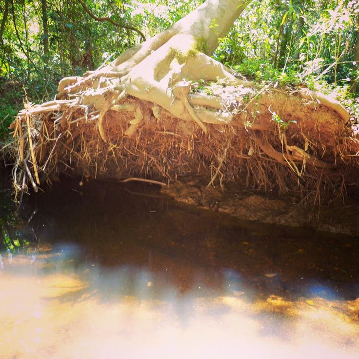 Photographer: Miss Z 4yrs   Comment: I saw a tree today. The creek is so deep that I think I could swim in it or float in it.   © Nature Play QLD 2016