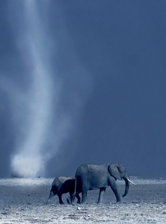 African Animals In Pictures - David Attenborough Africa photos - Woman And Home