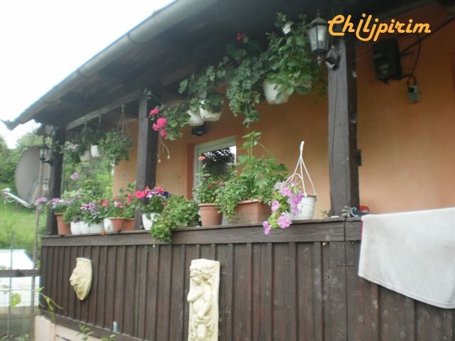 vand casa la tara  47 arii teren agricol   Sanmartin   Chilipirim.ro