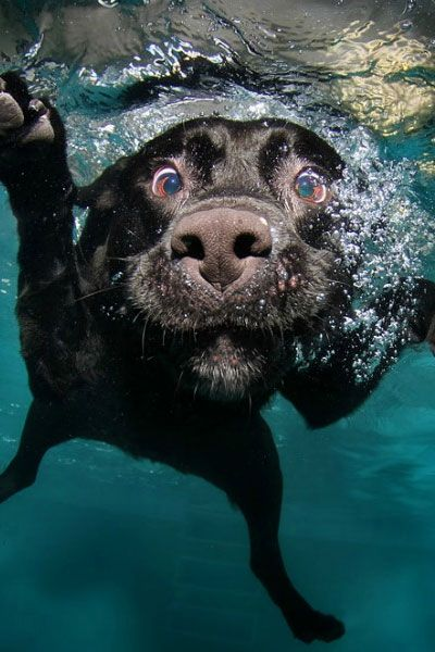 Naturally you think your pup couldn't get any cuter, but have you played fetch underwater with them?!