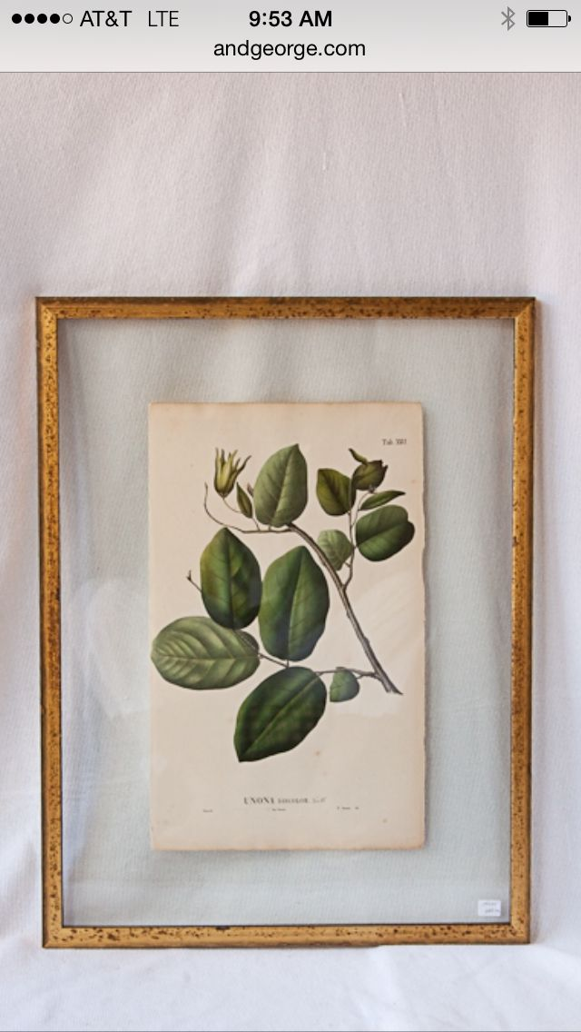 Botanical print floated between layers of glass in gold frame; a more finished look.
