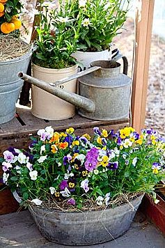 Pansies, Old Watering Cans, Pots, Galvanized...wonderful