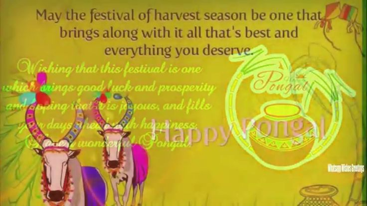 Happy pongal 2016 Pictures | Happy pongal 2016 Latest Wishes/SMS/Greetin...