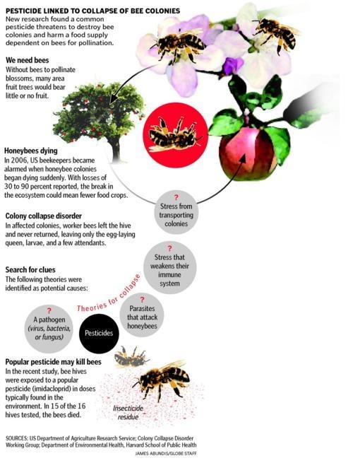 How pesticides kill bees.