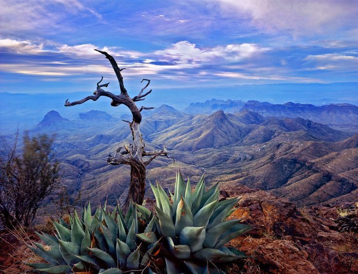 Agaves on South Rim, Big Bend National Park, TX-SR