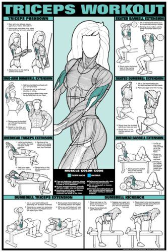 "Co-ed Triceps Workout 24"" X 36"" Laminated Chart http://www.mysharedpage.com/co-ed-triceps-workout-24-x-36-laminated-chart"