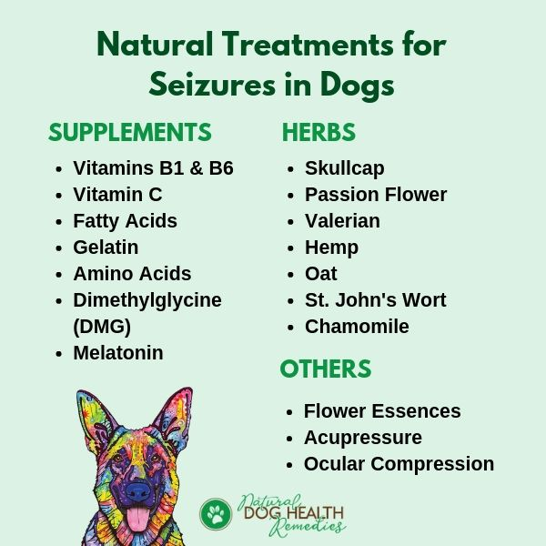 Home Treatments For Canine Seizures Natural Dog Remedies Dogs Health Remedies Dog Remedies