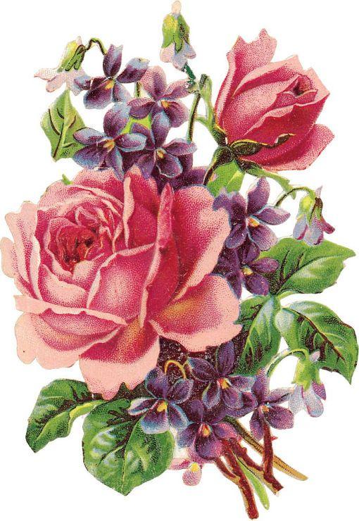 них розы с фиалками картинки имя других языках