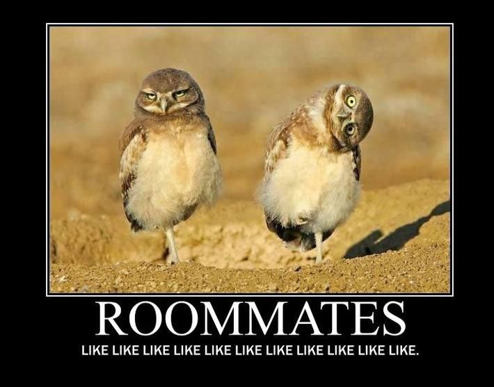 Funny Birthday Quotes For Roommates