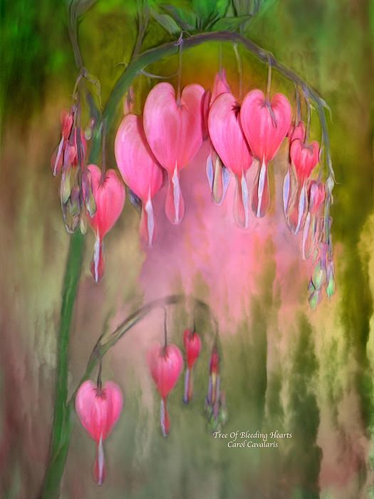 Baum der blutenden Herzen von Carol Cavalaris