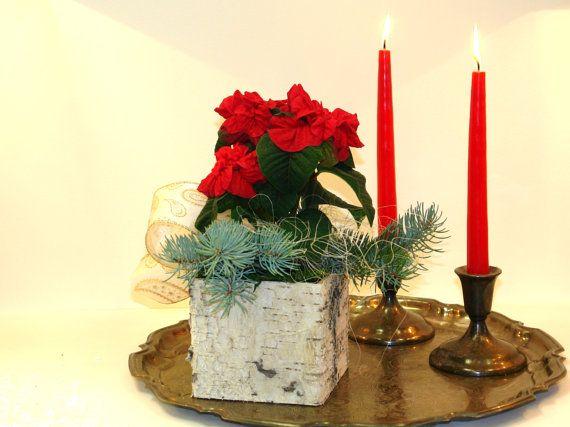 Christmas decorations ideas poinsettia birch bark by aniamelisa, $11.75