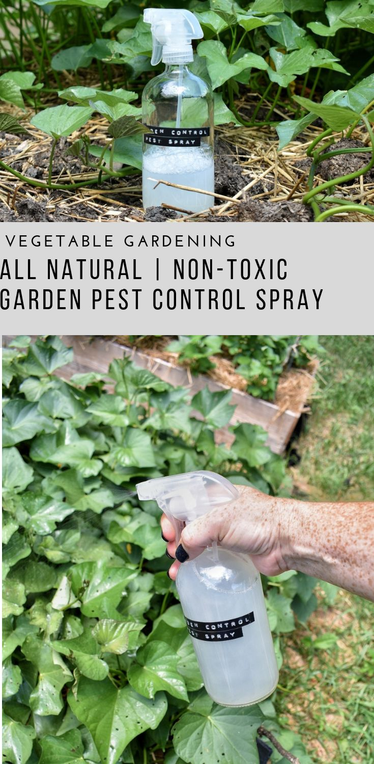 All Natural Non-Toxic Vegetable Garden Pest Spray | Rocky Hedge Farm