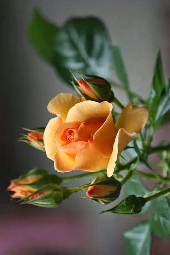 roses - Comunidade - Google+                                                                                                                                                     Más