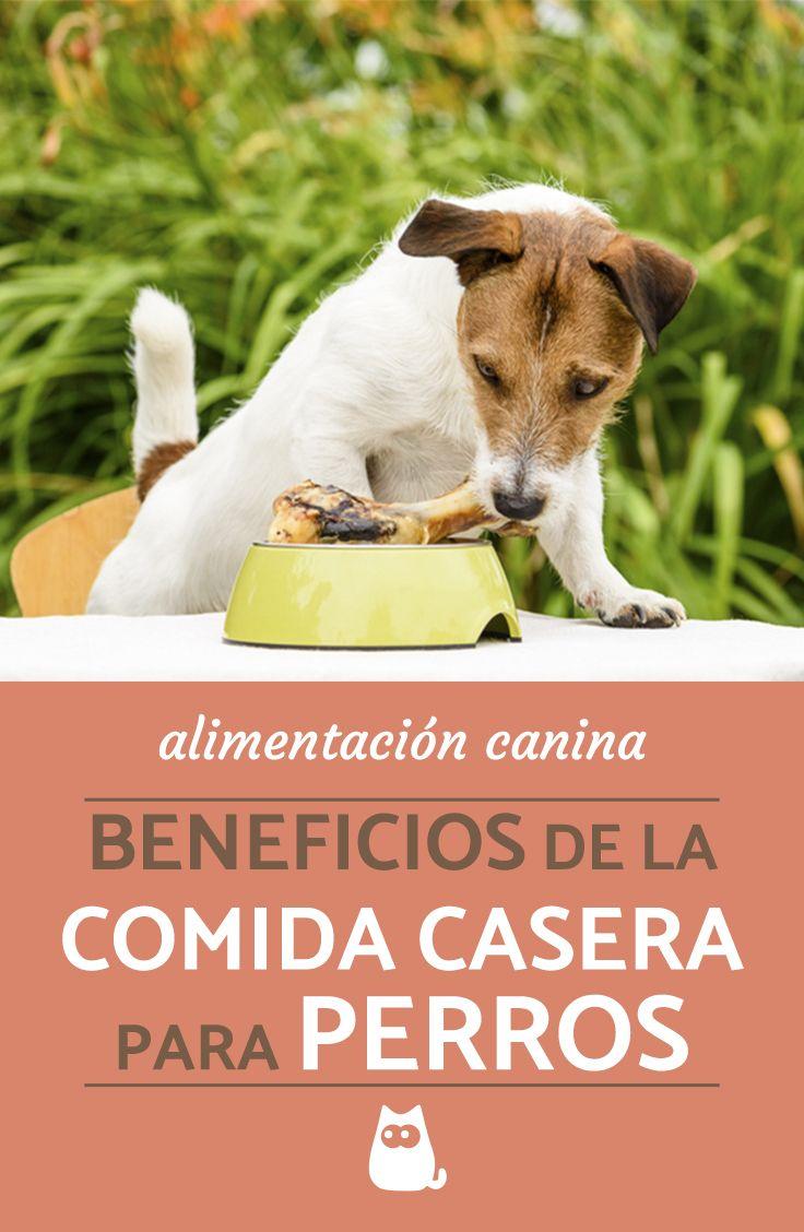 Beneficios De La Comida Casera Para Perros