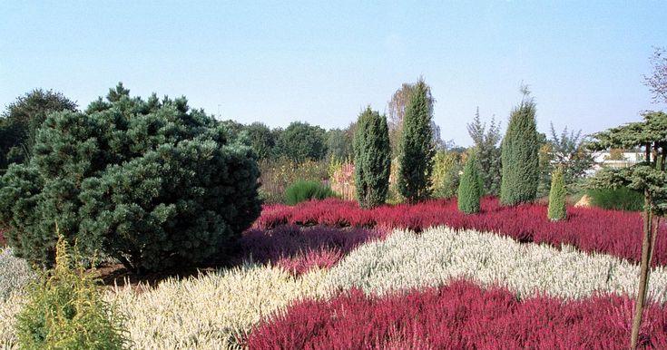 An   einem gut geplanten Heidegarten hat man das ganze Jahr über seine Freude.    Bei der Planung kommt es vor allem  auf die   richtige Kombination der Blütezeiten        an.